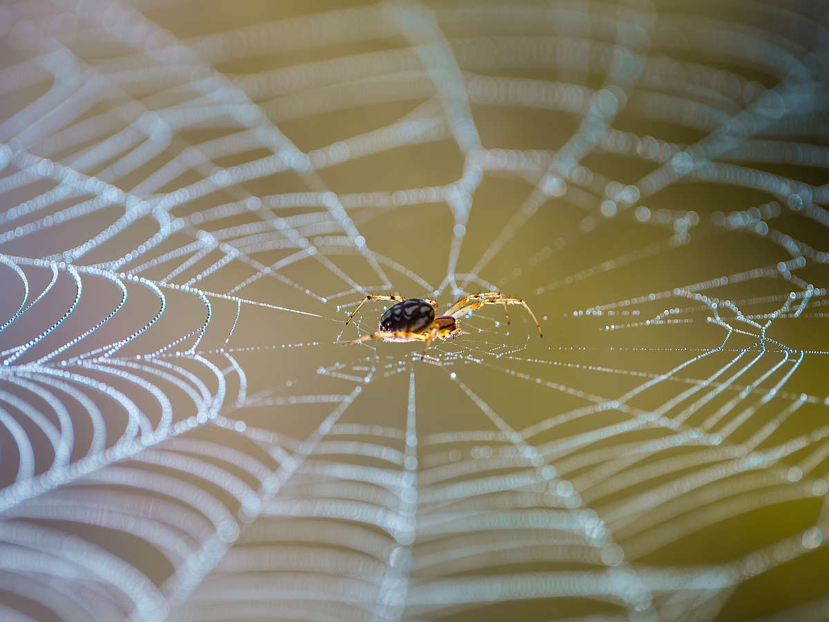 spider in the middle of a web